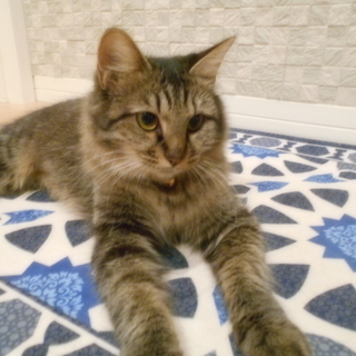 プロポーションが自慢の美人猫さん‼