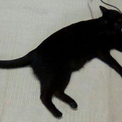 ノラクロ 美猫