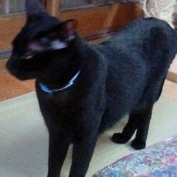 「ノラクロ 美猫」サムネイル2