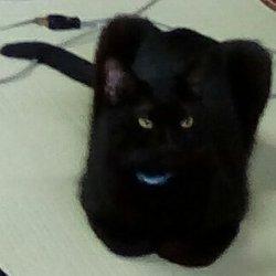「ノラクロ 美猫」サムネイル3