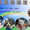 11/23(土)ララガーデン川口 保護猫譲渡会