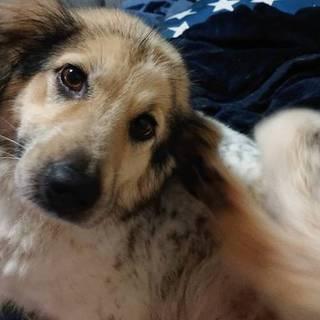 生後2週間くらいの子犬(画像は母犬です。)