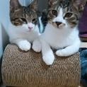兄弟猫、プリン君・クッキー君