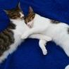 兄弟猫、プリン君・クッキー君 サムネイル3