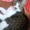 兄弟猫、プリン君・クッキー君 サムネイル4