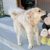 10月15日誕生日ミックス犬の赤ちゃん4匹