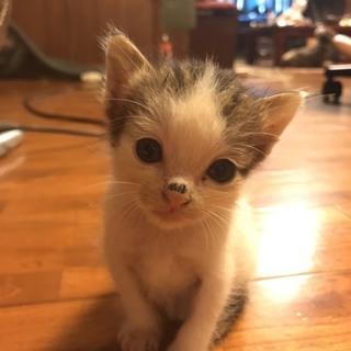 子猫2匹 生後1カ月
