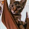 生後2ヶ月  美猫兄弟の家族を募集しています!