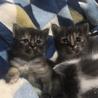 雑種子猫4匹