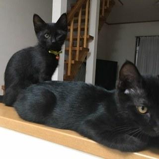 縁起の良い黒猫。絆が強い兄弟「しゅう&れい」