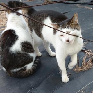 緊急!地域猫達の居場所が無くなります②(TT)