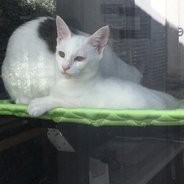 窓際猫みーちゃん
