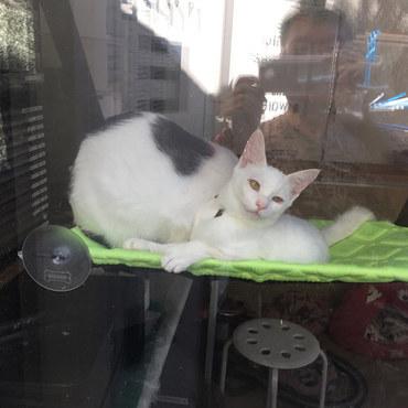 窓際猫みーちゃん2
