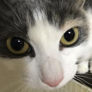 誰でもスリスリ触られるのが大好きな猫ちゃんです。