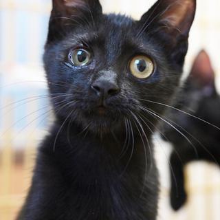 片目にハンディあり、黒猫ちゃん