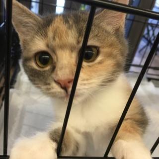 カワイイ子猫の里親を募集しています。