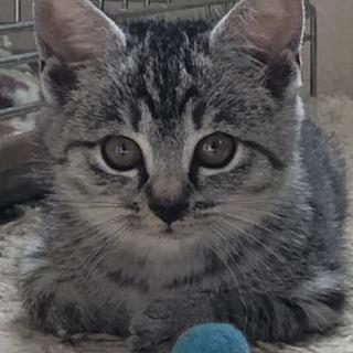 子猫の里親募集、カワイイ子猫数匹おります。