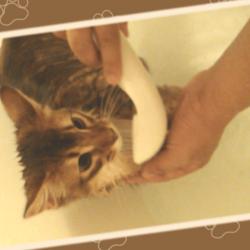 初めてのシャワーにドキドキするうちのソマリです