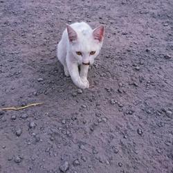 「弱ってる猫」サムネイル1