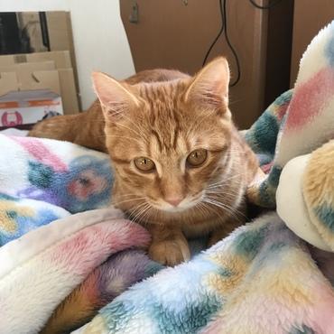 参考程度に…先住猫(生後7ヶ月)です。優しい子なのですがジジを攻撃する事があるので隔離しています。ジジも負けじと闘います。普段は隔離して徐々に慣らしています。