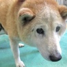 岩国健康福祉センター収容犬135
