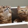 吊戸棚に入るうちの猫たちです
