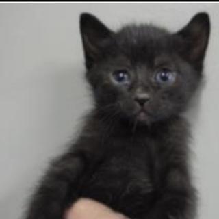 里親様に迎えられました。子猫♀238