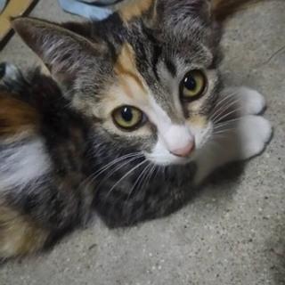 三毛猫のエマちゃん