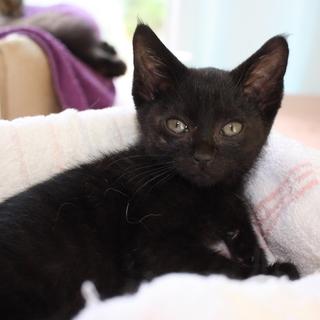 可愛い小柄な黒猫リリスちゃん