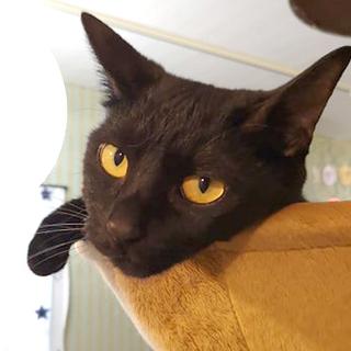 マイペースな小柄な黒猫ちゃん