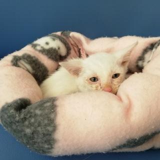 淡路島の子猫達をお見合いをしませんか