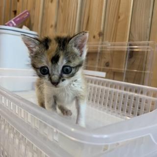 とても可愛いミケ猫ちゃんです!