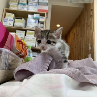 可愛らしいキジ猫ちゃんです^ ^