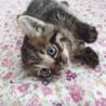 かわいい子猫です。