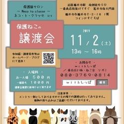 11.2藤井寺保護猫譲渡会