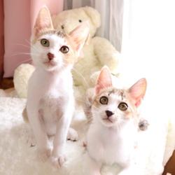 <守山区>猫の譲渡会 サムネイル1