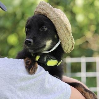 帽子の似合う6カ月の可愛い仔犬くん