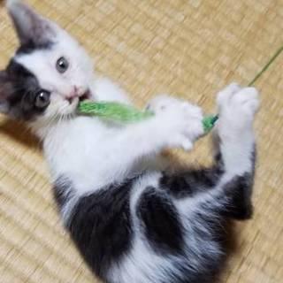 人懐っこい猫の貰い手を探しています。