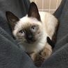 寒川町役場で保護猫譲渡会!