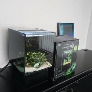 熱帯魚1匹&水槽