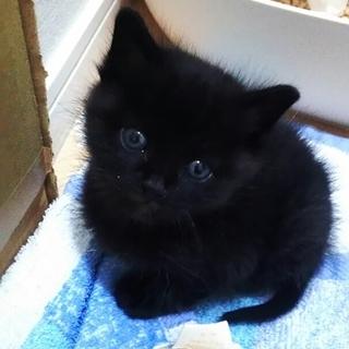 黒猫の男の子です。