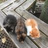 3兄弟の子猫たち(現在、全員幸せ中)