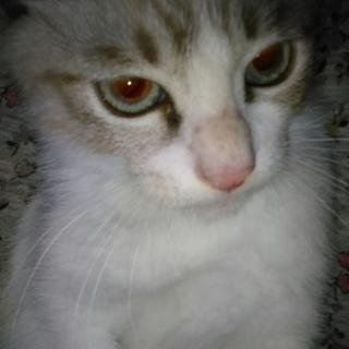 猫飼育経験アリ先住猫先住ペット無しの好条件の方