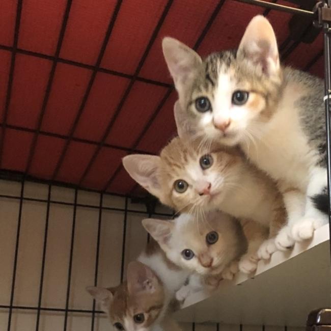みなとねこ(東京都港区の主婦らによる地域猫ボランティア)のカバー写真