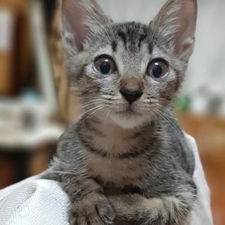 可愛い子猫の里親募集!