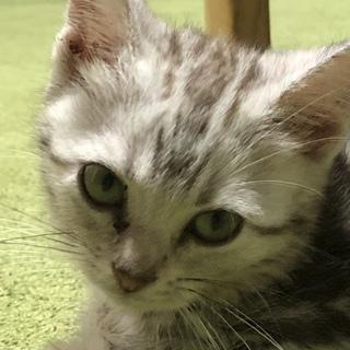 里親募集❤️人懐っこい甘えん坊な子猫ちゃんです