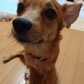 目の丸い可愛いmixの女の子