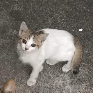3匹の子猫♡家族になって♡