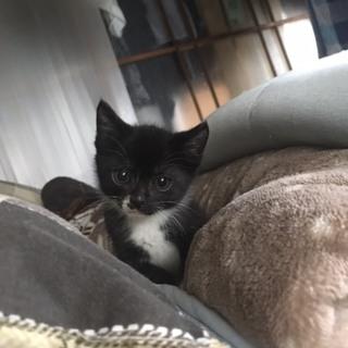 生後1ヶ月子猫
