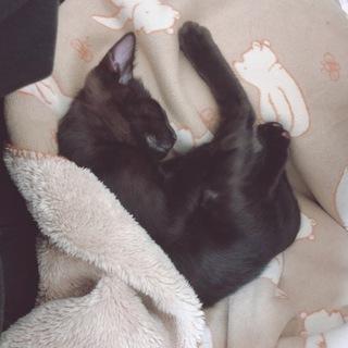 黒猫かぎしっぽ君二ヶ月